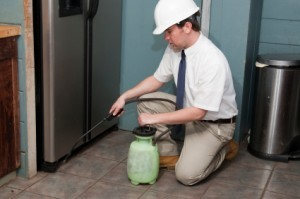 How Do You Select A Building And Pest Inspection Company?